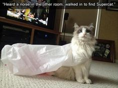 Supercat! An everyday occurrence at our house (at least, every day that a plastic bag with handles comes home...)