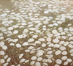 https://flic.kr/p/cJqMnh | 943219754110 | PRIVATE COLLECTION - FIELD OF QUEEN ANNES LACE