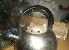 If the kitty fits--   Cats who prove there's no space too small if the cat wants it enough