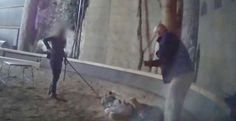 Zoo Filmed Beating Animals Shuts Its Doors For Good