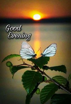 Good Evening Love, Good Evening Wishes, Good Evening Greetings, Happy Sunday Morning, Good Morning Coffee, Good Night Lover, Evening Pictures, Good Morning Images Flowers, Good Night Prayer