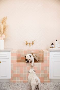 Functional Mudroom Designs: Pretty pink mudroom design inspiration with tiled pet bath for the dogs Dog Feeding Station, Dog Washing Station, Dog Station, Space Station, Home Renovation, Home Remodeling, Home Office, Three Birds Renovations, Dog Spaces