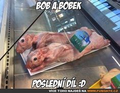 Bob a Bobek Good Jokes, Funny Jokes, Funny Pins, Pranks, I Laughed, Haha, Entertaining, Memes, Pictures