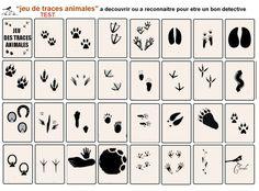 jeu_de_traces_animalieres_TEST
