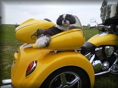 Motorcycle Trike Pet Carrier  This is what we need for Boo!