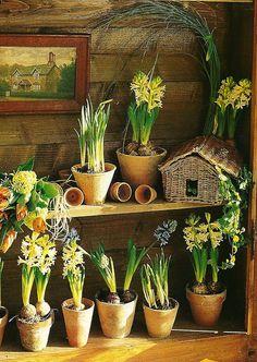Growing bulbs in a luminous potting shed Garden Bulbs, Garden Pots, Potted Garden, Garden Gnomes, Garden Ideas, Love Garden, Garden Shop, Bulb Flowers, Flower Pots