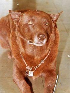Red Dog WA Karratha, WA