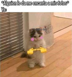 "Gatos Cool en Instagram: "". . . . . #memesdegatoscool #gatoscool😸 #gatos_cool #uwu #fotodeperfil #pena #penoso #tímido #timido #timida"""