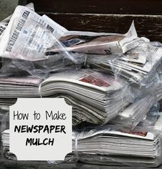 Earth worms love old wet newspapers. if you want them in your soil, use newspaper mulch. See how to make and use it. http://thegardeningcook.com/newspaper-mulch-control-weeds-and-help-your-soil/