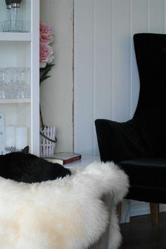 eli bella : En liten høststorm Bella, Shag Rug, Sofa, Rugs, Home Decor, Shaggy Rug, Farmhouse Rugs, Couch, Decoration Home