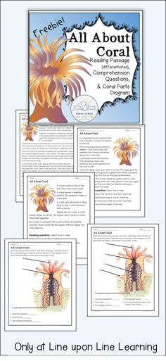 Food Chain Pinterest Ocean Food Chain Food Chains And Food Webs