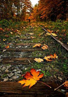 El mundo empieza a desvestirse en otoño en preparación para la llegada del invierno. La desnudez siempre va acompañada de aguijones de frío.