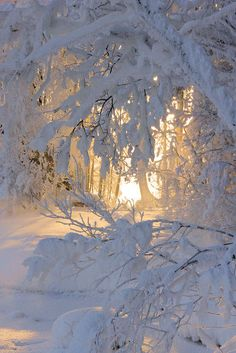 when nature frosts & glows the world in shimmering silvers & golds ~ precious lacings & filtered patterns
