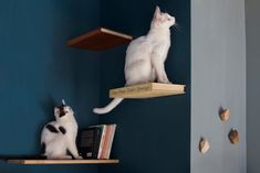 Come for the Coffee, Stay for the Cats! Italian Eatery Designed for People and Cats | Apartment Therapy