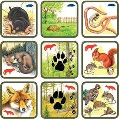 Pexetrio Plus: Savci Animal Coverings, Kindergarten Anchor Charts, File Folder Activities, Theme Nature, Montessori Practical Life, Animal Tracks, Forest Theme, Animal Habitats, Montessori Materials