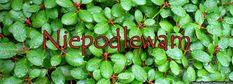 niepodlewam: Preparat z czeremchy na kleszcze Composters, Garten, Balconies