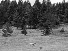 gray willewoodwork