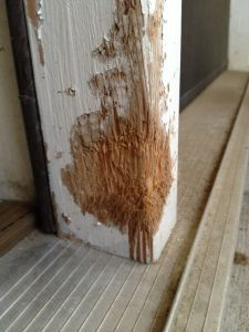 Fixing a dog-chewed wall - how to easily fix a wooden door frame that you thought your dog ruined!