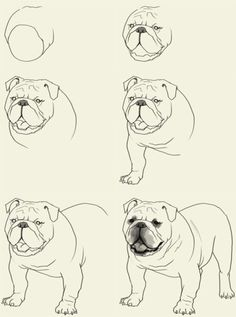 How-To-Draw-Bulldog learning techniques, art inspiration drawing, dog steps Animal Drawings, Pencil Drawings, Art Drawings, Cãezinhos Bulldog, Bulldog Drawing, Puppy Drawing, Dog Steps, Creation Art, Art Inspiration Drawing