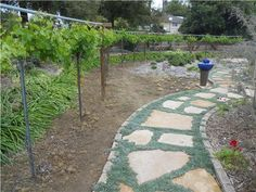 drought tolerant landscape, california | San Diego Landscaping - Landscaping Network