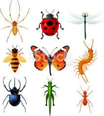insect illustrations - Google Search