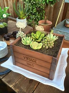 Succulent Crate Planter Box Cake by Royal Bakery