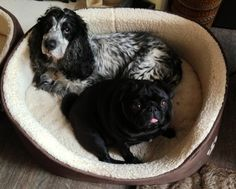 Dillon and Tilly get a new bed