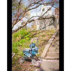 【kawaguchi.masanori】さんのInstagramをピンしています。 《#祭 #桜 #小田祭 #再発見sado #sadoisland #ファインダー越しの私の世界#写真好きな人とつながりたい #写真撮ってる人と繋がりたい #写真 #フォト #写真部 #photo #photography #photogrid #photoaday #東京カメラ部#tokyocameraclub》
