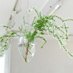 Windfall hanging vase (なまけもの)