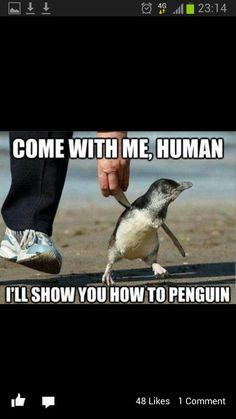Penguin love!