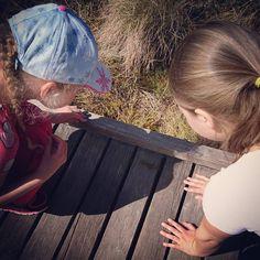Lapset löysivät luontoreitiltä myös sisiliskon  #suomi100 #kurjenrahka