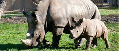 Zoo Schmiding Horses, Animals, Road Trip Destinations, Animales, Animaux, Animal, Animais, Horse