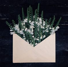 Kiev-based photographer Anna Remarchuk has created these poetic compositions tucking flowers inside of envelopes from her great-grandfather. Love Flowers, My Flower, White Flowers, Flower Art, Flower Power, Beautiful Flowers, Luxury Flowers, Envelopes, Floral Letters