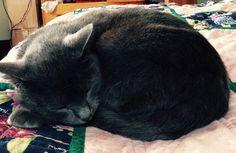 Buster Cat | Pawshake