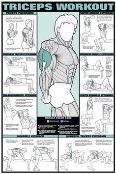 "Amazon.com: Triceps Workout 24"" X 36"" Laminated Chart: Sports & Outdoors"