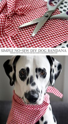 Easy No-Sew Pet Bandana | Make a cute little scarf for your dog or cat in minutes!