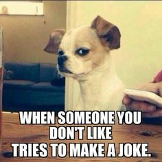 Funny animals have always been an internet sensation. They& got what it takes to make us laugh, especially when they& turned into memes. Here are our collection of the most funny moments of animals of the internet. Funny Dog Memes, 9gag Funny, Funny Animal Memes, Cute Funny Animals, Funny Relatable Memes, Haha Funny, Funny Cute, Funny Dogs, Memes Humor