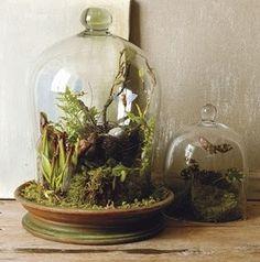 テラリウム|鉢植え植物学会