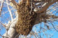Beekeeping info