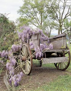 Farm Wagon with Wisteria.might have to do that with my wisteria. Porches, Wooden Wagon, Old Wagons, Flower Cart, Pergola, Down On The Farm, Old Farm, Country Life, Country Living