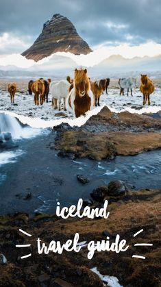 Northern Lights Tours, Find Instagram, Bucket List Destinations, Iceland Travel, Travel Aesthetic, Best Cities, Travel Essentials, Travel Pictures, Travel Guides