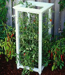 Construct a Victorian-style tomato cage