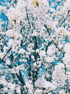 Best Of Aesthetic Flowers Background And View Spring Aesthetic, Flower Aesthetic, White Flowers, Beautiful Flowers, Nature Architecture, Blue Backgrounds, Pretty Pictures, Mother Nature, Planting Flowers