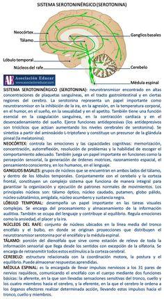 Infografía Neurociencias: Sistema serotoninérgico (serotonina).   Asociación Educar