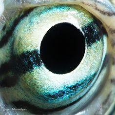 Iris Animal parte II ( imagenes Impactantes)