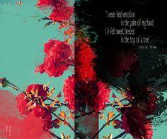 Nothern Sky - Nick Drake <3