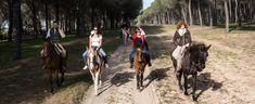 Romería - Creativando - Actividad de Team Building de Exteriores #TeamBuilding #Actividad #Romería #Eventos #Creativando Team Building, Horses, Animals, Teamwork, Group, Activities, Events, Trends, Animales