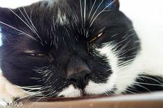 Almost asleep by maurosys IFTTT 500px cat animal sleep black pet gato dormir cats catsonweb cute