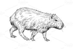 Check out The vector of capybara by hadkhanong on Creative Market