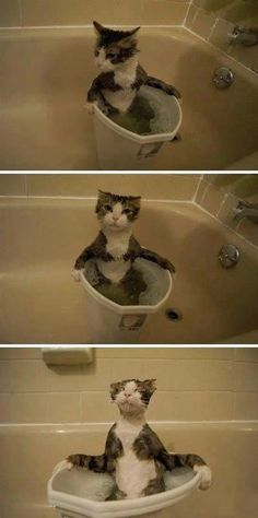 And they say cat's don't like water!